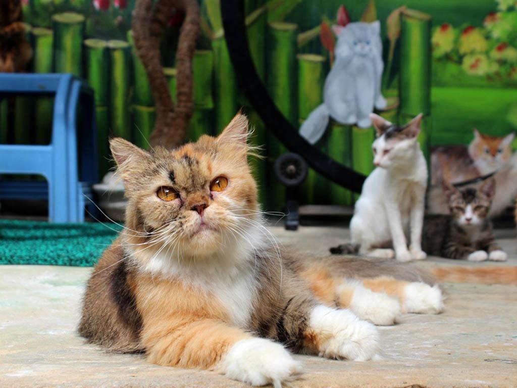 Cerita Kucing Aceh (2)